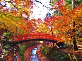 「北野天満宮・もみじ苑」は京都の新紅葉名所!