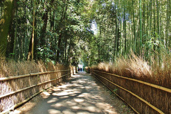 野宮神社から北へ、竹林の中に新たな散策路が