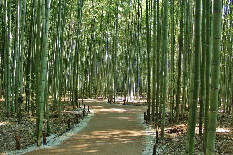 これは穴場!嵐山・嵯峨野の竹林に新名所「竹林の散策路」が登場!