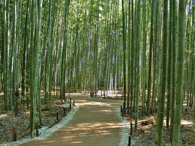 嵯峨嵐山駅から歩いて満喫!おすすめスポット10選