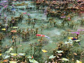 その美しさはまるで絵画!岐阜県関市の「モネの池」の美しさの秘密とは!?|岐阜県|トラベルjp<たびねす>