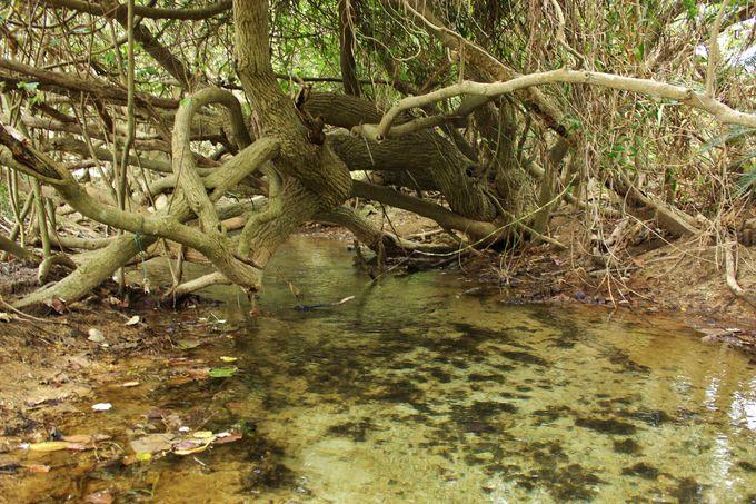 国の天然記念物指定「塩川」は小さな川