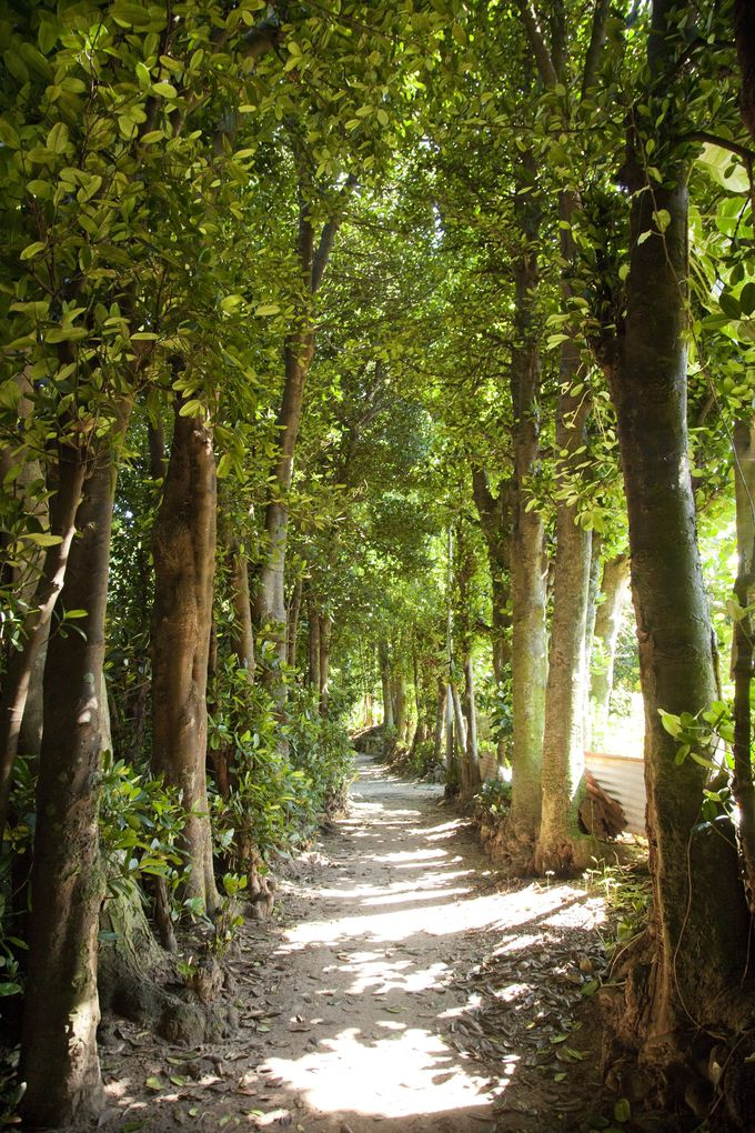 沖縄の原風景がここに残されている