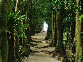 「備瀬のフクギ並木」はまるでトトロのトンネル!?沖縄の原風景を楽しもう