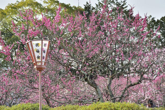 山科「随心院」の小野梅園