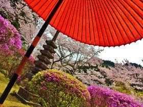 春もやっぱり1日100人限定!京都洛北・白龍園は春も見逃せない美しさ!|京都府|トラベルjp<たびねす>