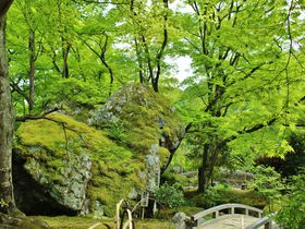 青もみじを堪能する春の特別拝観!嵐山「宝厳院」は秋にもう一度訪れたくなる!|京都府|トラベルjp<たびねす>