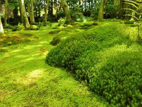 モッフモフの苔の庭!京都嵯峨野の穴場「祇王寺」の魅力は紅葉だけじゃない!