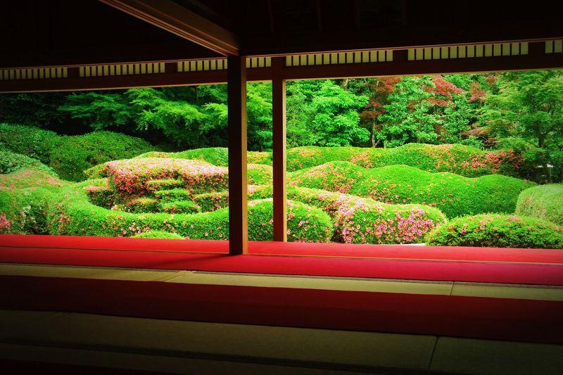 ピンクに染まる絶景庭園!滋賀「大池寺」の蓬莱庭園が想像以上に美しい