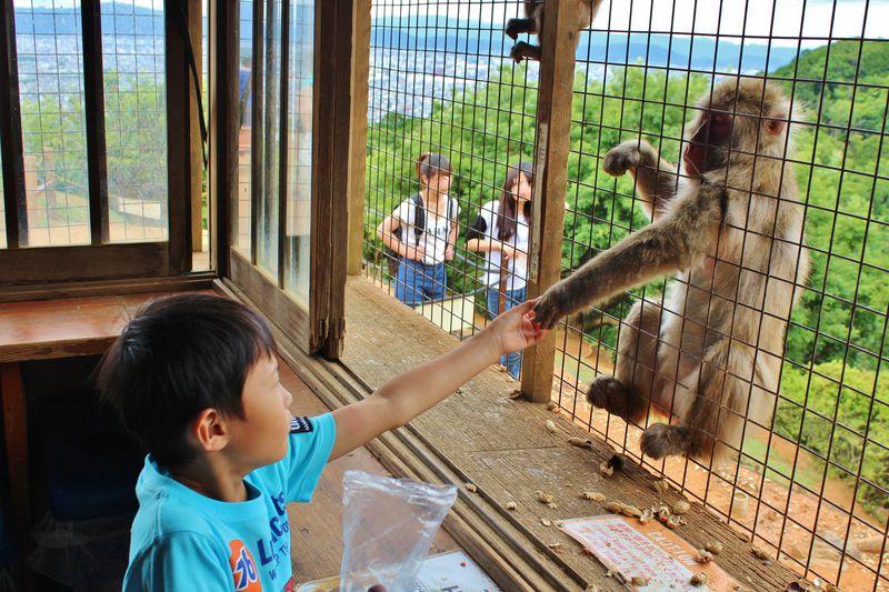 「嵐山モンキーパークいわたやま」は外国人に大人気!でも人間が檻に入るの!?
