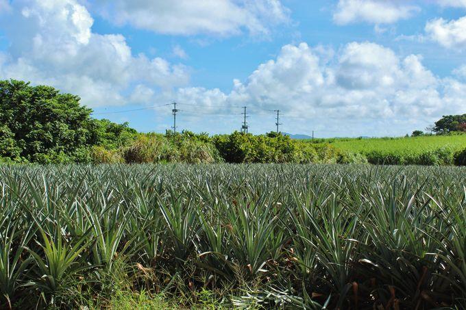 沖縄らしい田園風景も味わおう