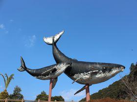 くじらの町・和歌山県太地町の観光スポットまとめ|和歌山県|トラベルjp<たびねす>