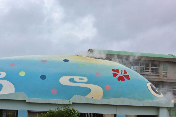 漫湖公園には潮を吹くクジラもいる