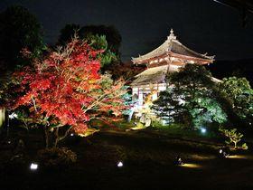 1日100人限定!京都「鹿王院」ライトアップ夜間特別拝観