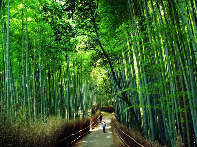 自然の情景も京都のフォトスポット