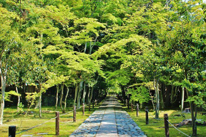 京都の寺社はその参道に魅せられる