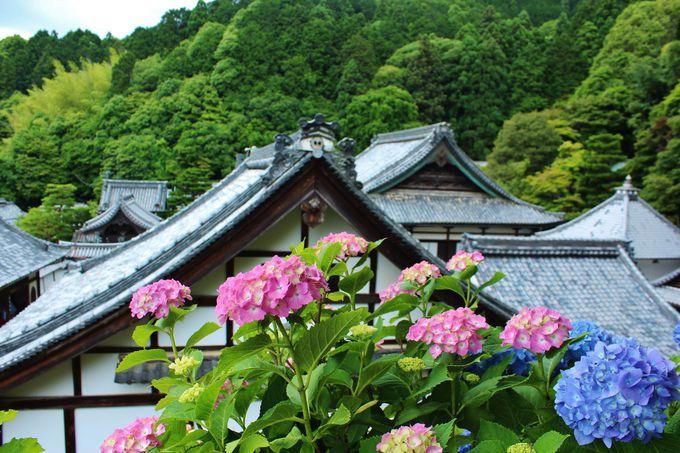 近年注目上昇中!おすすめの京都あじさいスポット
