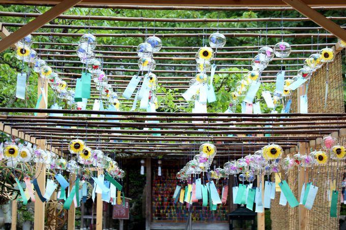 正寿院は京都の風鈴寺として有名