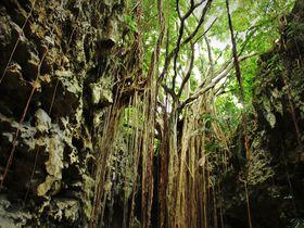 沖縄「ガンガラーの谷」で感動体験ツアーに出発しよう!