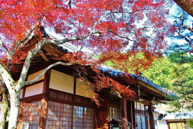 「神蔵寺」の紅葉をオススメする理由。