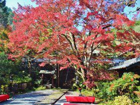 京都最速!亀岡「神蔵寺」の紅葉が穴場で人に教えたくない!