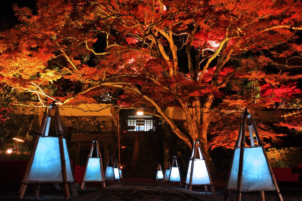 「神蔵寺」の紅葉みどころ。ライトアップもアリ!
