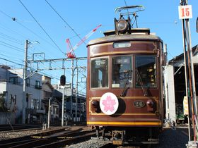 あの日を忘れない…!嵐電「キミマツサクラ号」が震災の記憶を乗せ京都を走る|京都府|トラベルjp<たびねす>