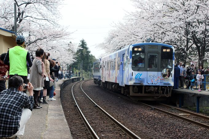 のと鉄道を彩る満開の桜トンネル!〜能登さくら駅〜