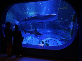 日本海側最大の水槽「ジンベエザメ館 青の世界」〜のとじま水族館〜