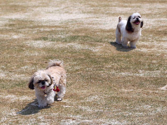 石川県内の道の駅では初となる「ドッグラン」の広場。愛犬と一緒にリフレッシュ♪
