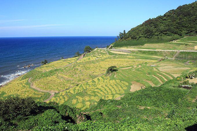 世界農業遺産に認定された「能登の里山里海」のシンボル、白米千枚田♪