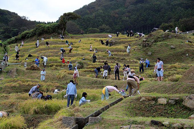 どなたでも参加できるオーナー制度でお米作りの喜びを体験♪