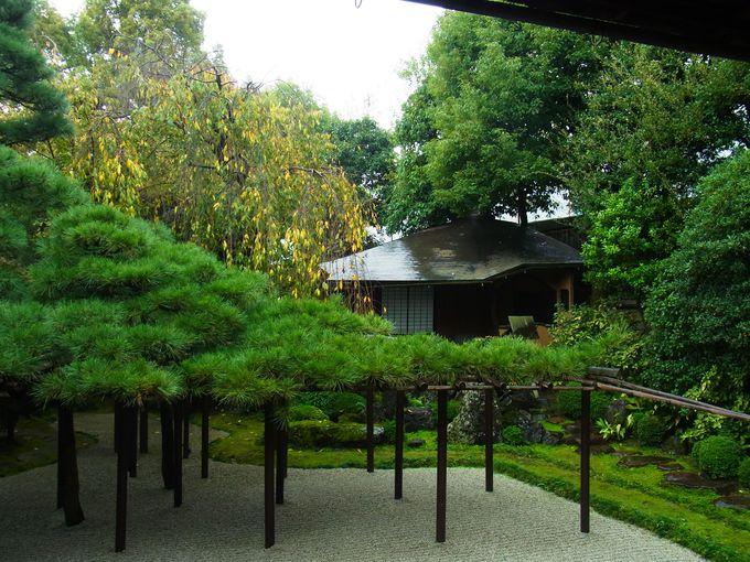 1階奥座敷「松の間」から眺める臥龍松