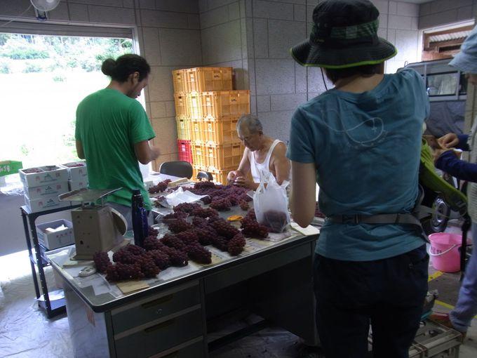 果物生産農家があつまる神宮寺集落
