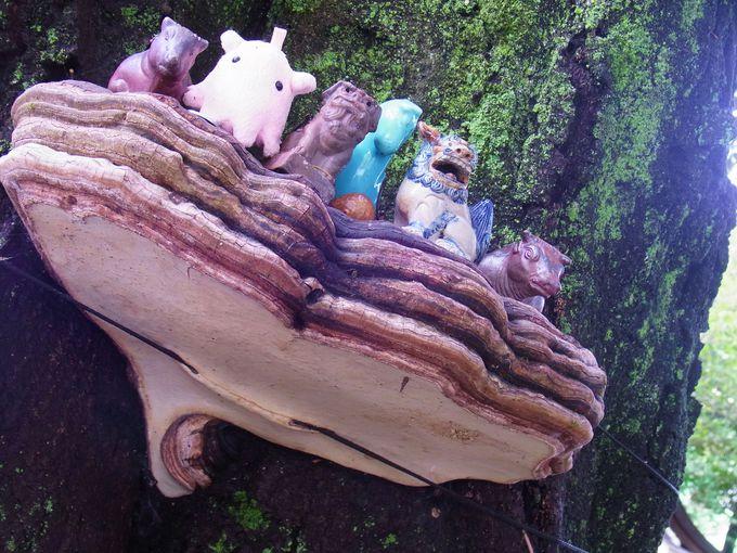 吉備津彦神社の杜の守り神・UFOめくきのこがスタート。