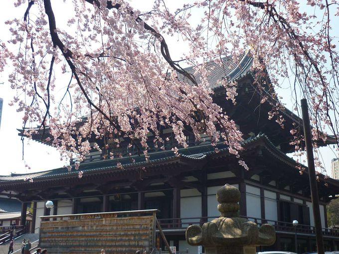 桜越しの大殿