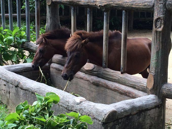 沖縄ならではの与那国馬やアグーも必見です!