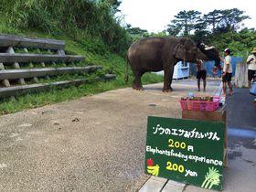 最南端の動物園でゾウやキリンにエサあげ!「沖縄こどもの国」