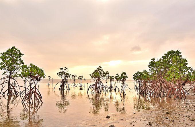 マングローブが創る奇妙な風景。沖縄・石垣島「名蔵湾」