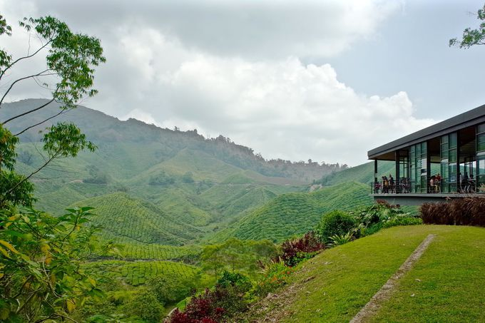 「BHO TEA」絶景カフェテラスで絶品紅茶をいただく!