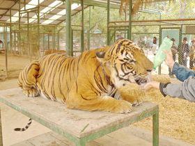 世界一危険!?猛獣とふれあえるアルゼンチン「ルハン動物園」