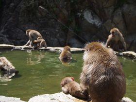 長野・地獄谷温泉と野猿公苑