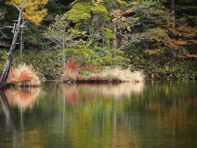 幻想的な水面の鏡。明神池