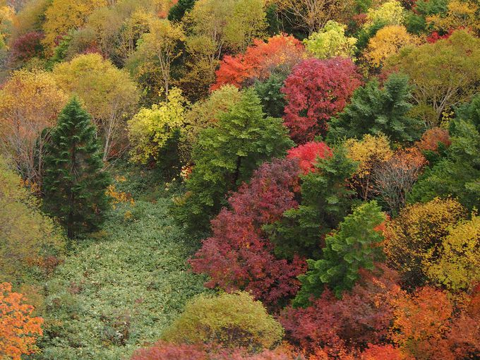 ミニチュアのように広がる紅葉