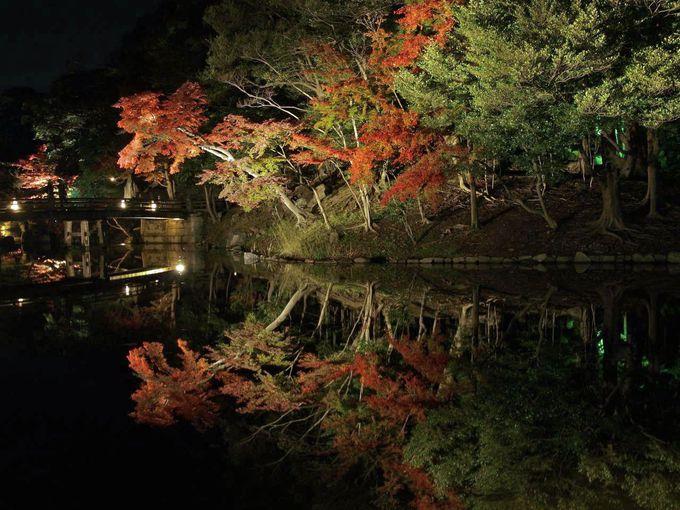 必見の玄宮園。紅葉の時季はライトアップも!