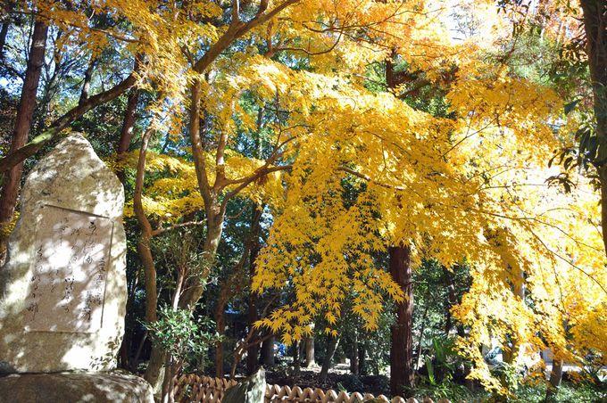 いろは松周辺は黄葉も鮮やか!井伊直弼の歌碑も要チェック!
