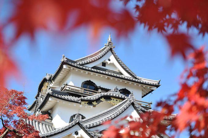 意匠的にも素晴らしい、白亜の天守が紅葉に映える!