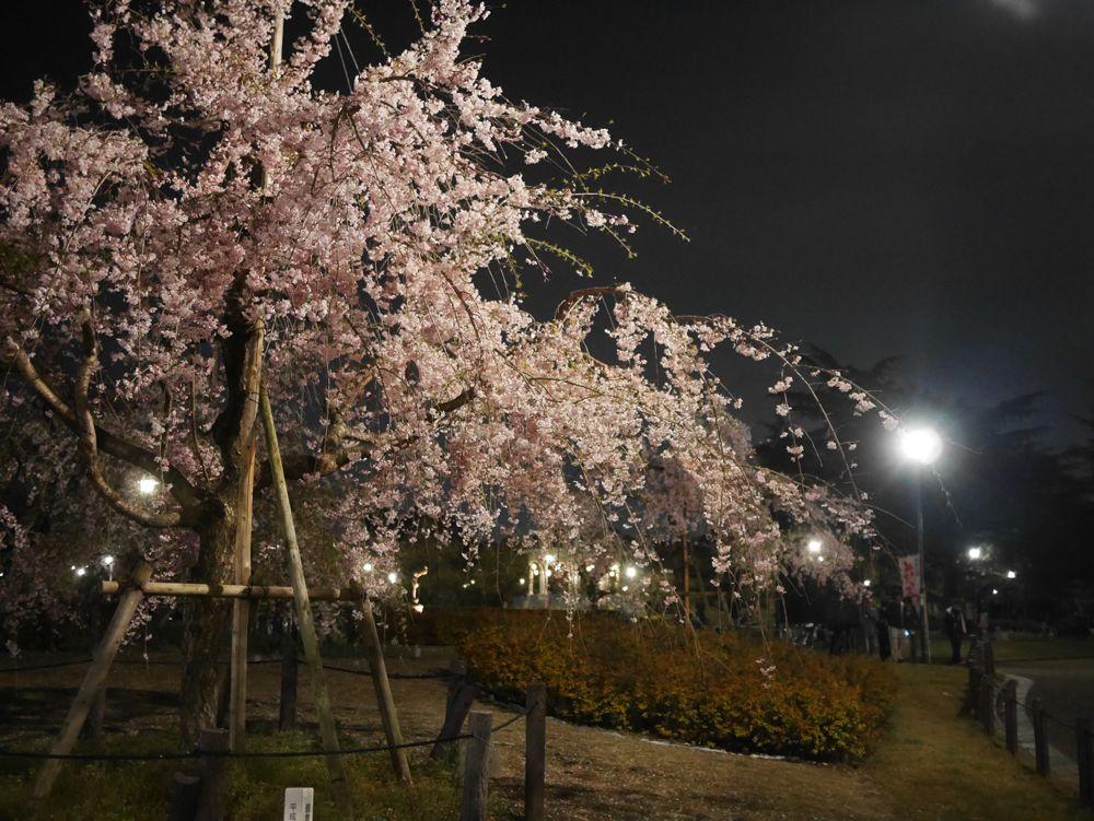 鶴舞公園の魅力は、咲き誇る四季の花々。