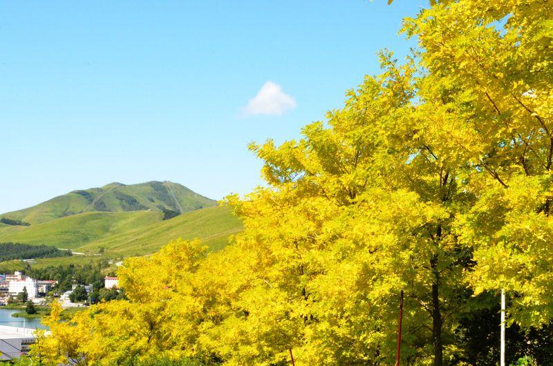 信州の味覚と絶景!白樺リゾート池の平ホテルの万能ぶりに惚れる