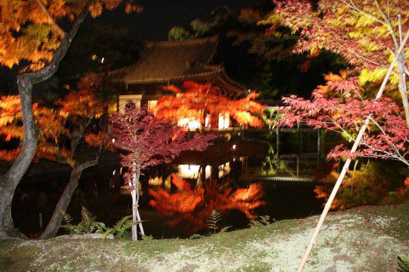 京都、東山、高台寺の美しすぎる紅葉が描く幽玄の世界。